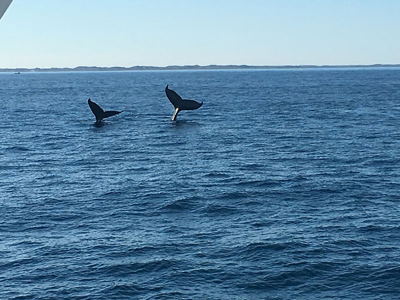 Gallery Whale Watching Augusta7